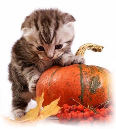 Pumpkin For Cats