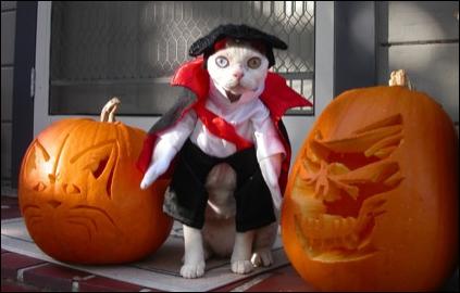 EL HILO DE LOS AMIGUETES XII Costume-pumpkin