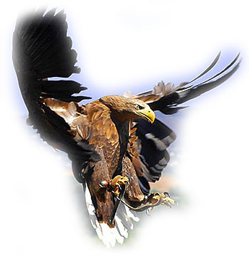 Eagle S Attacking Cats